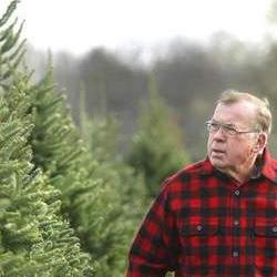 Dr. Dan Cassens at Christmas tree farm