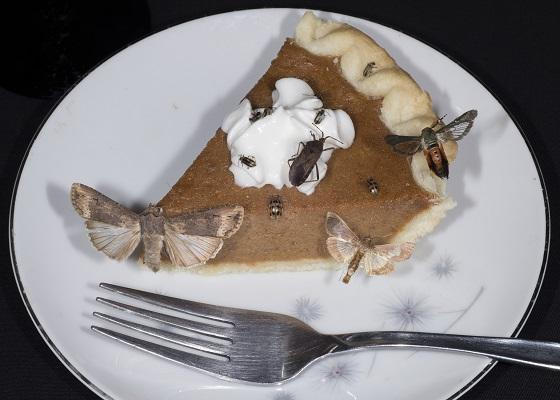 picture of insects on top of a piece of pumkin pie