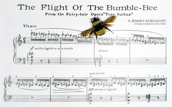 photo of a bumblebee on top of sheet music
