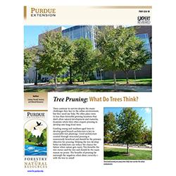 FNR-534-W Tree Pruning: What Do Trees Think? publication