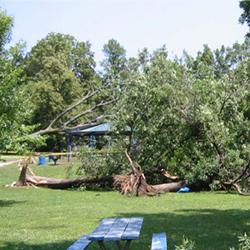 Storm damage, trees down