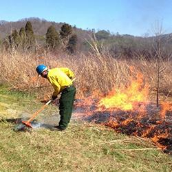 Person raking firebreaks from prescribed fireburn.
