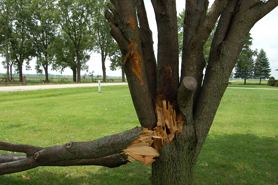 picture of a storm-damaged tree