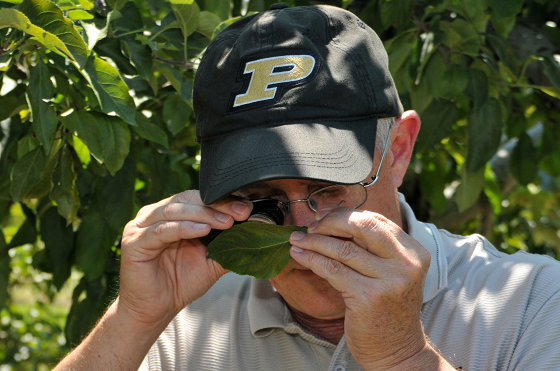 Ken Foster, Purdue professor of entomology, uses a hand lens to inspect leaf mites