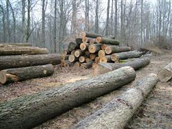 Timber Chopped and Stacked