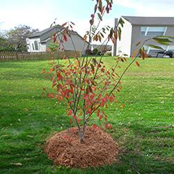 Planted tree in backyard.
