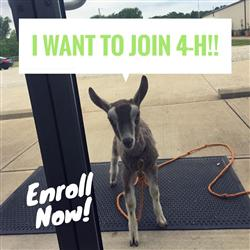 Join 4-H!