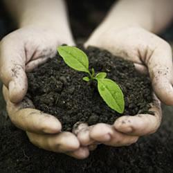 Hands holding soil and young plant