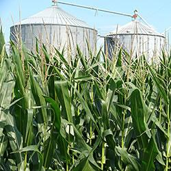Perhaps this scene in Tippecanoe County in mid-July is an indication that grain storage facilities w