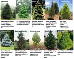Different Christmas Trees