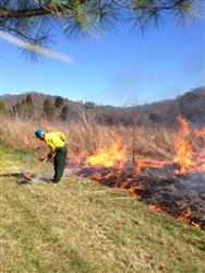 Person raking the firebreak where fire did creep away from the burn area.