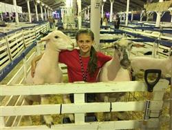 girl in 4-H showing sheep