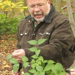 Lenny Farlee, invasive Jet Bead, Invasive Plant Training