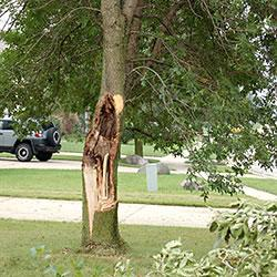 Recent storms have caused major tree damage throughout Indiana. The brown area in the trunk shows th