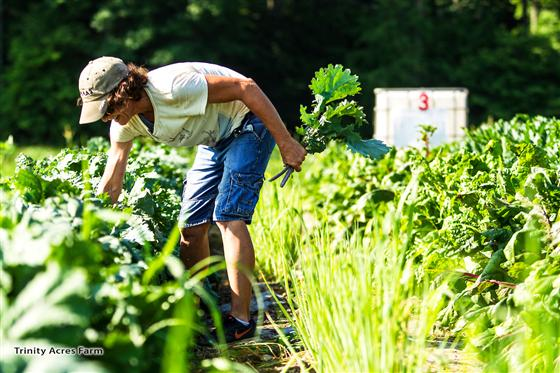 Women harvesting produce at Trinity Farms