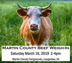 Beef Weigh-In