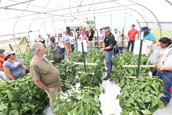 Petrus Langenhoven is explaining to attendees how to grow sweet peppers in a high tunnel