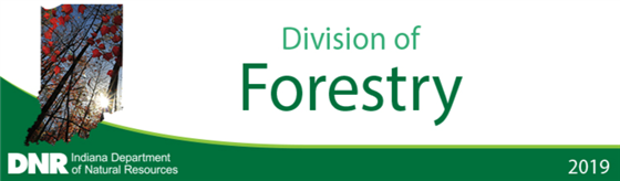 DNR Division of Forestry