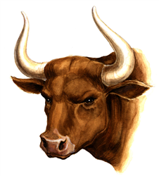 Bull picture
