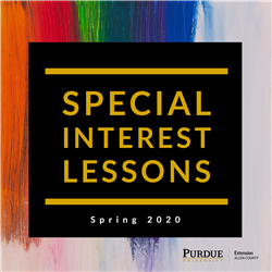 Special Interest Lessons