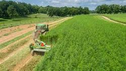 Hemp Production