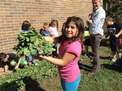Harvest day at Hayden Elementary!