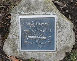 Space tree plaque