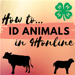 How to ID Animals in 4Honline