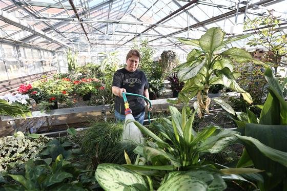 Woman with plants in greenhouse