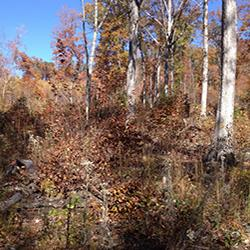 Woodlots with weeds and other fill in covering ground area.