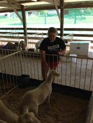 Sheep 4-H Project