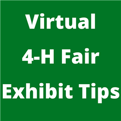 virtual fair tips