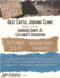 Beef Cattle Judging Clinic