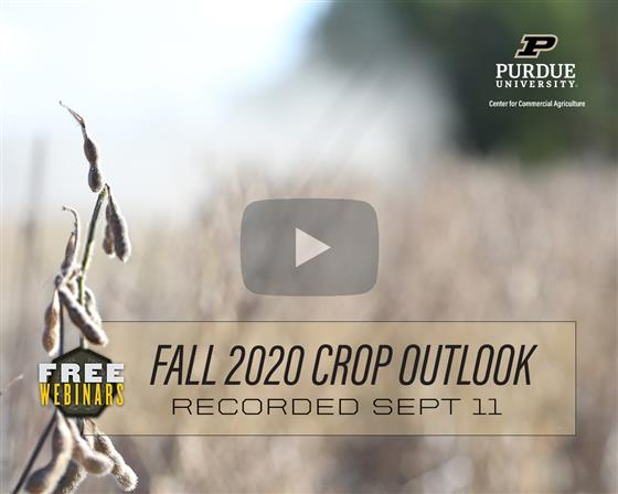 Purdue Fall Corn & Soybean Outlook Webinar Recording Available