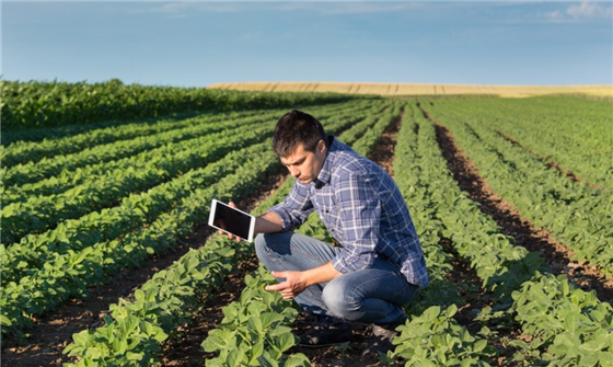 Man stands in soybean field holding an iPad.