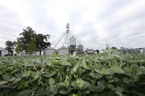 Image of farmland with buildings and a field of soybeans. The Purdue Extension Land Lease Team invit