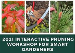 2021 Interactive Pruning Workshop for Smart Gardeners