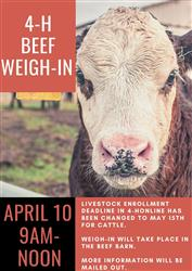 Beef Weigh In