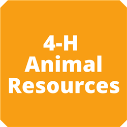 Animal Resources