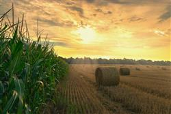 Image of farmland with corn and straw at sunset