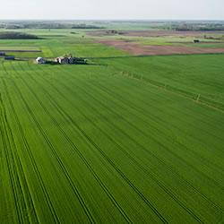 Aerial view of corn fields