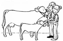 Cow Calf Pair Clipart