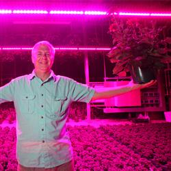 Tim Galema stands in his West Lafayette greenhouse, bathed in the glow of