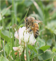 Beekeeping A to Z