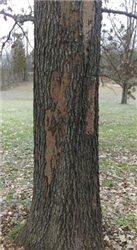picture of the trunk of a dead tree
