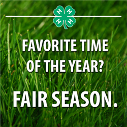 Favorite Time of Year? 4-H Fair Season