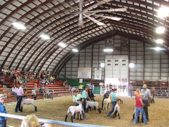 Putnam County Sheep show