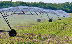 photo of a dry soybean field being irrigated