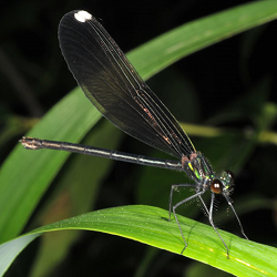 picture of a damselfly