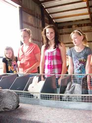 Henry Co 4-H Rabbit Project